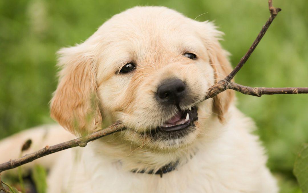 Du kan sagtens tage din hund med på tur sammen med familien